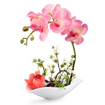 Simulation Phalaenopsis Bonsai