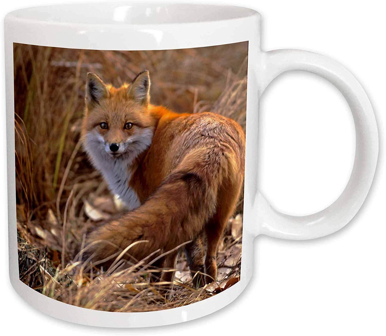 3dRose Colorado, Jefferson County Red Fox US06 BJA0261 Jaynes Gallery Ceramic Mug, 15-Ounce