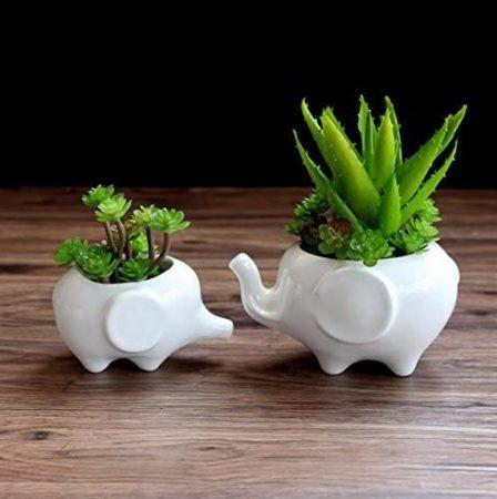 Gift Pro Elephant Plant Window Boxes