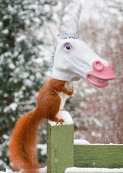 Head Squirrel Feeder