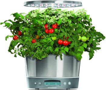 Home-grown vegetables