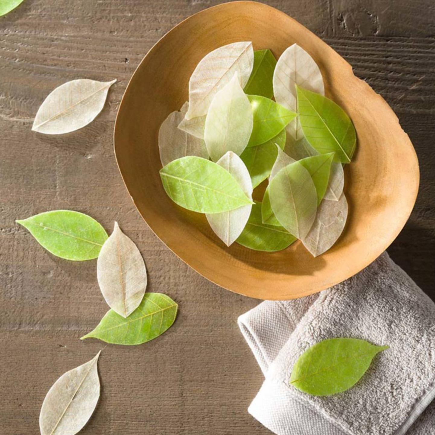 soap leaf